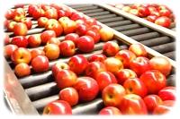 apple juice concentrate manufacturers usa