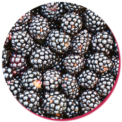 bulk natural blackberry essence