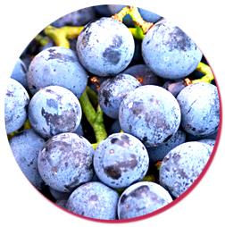 bulk natural concord grape essence