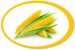 dehydrated corn kernels and corn powder