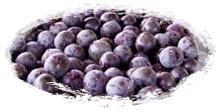 iqf frozen acai berries