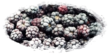 iqf frozen blackberries