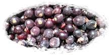 iqf frozen blackcurrants