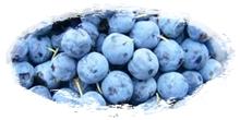 iqf frozen blueberries
