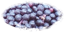 iqf frozen elderberries