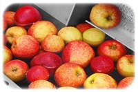 organic apple concentrate united states