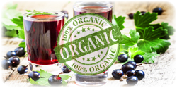 organic black currant concentrate