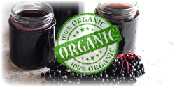 organic elderberry concentrate